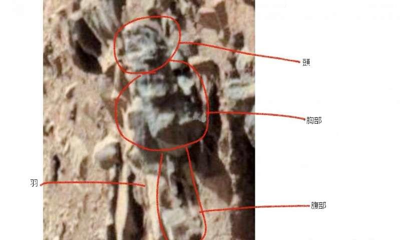 ロモーザー博士が発表した昆虫の化石らしき画像(オハイオ大学/Phys.orgより)