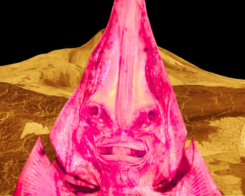 金星人イメージ